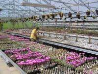 grossen kaktus kaufen